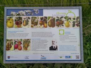 Ausgesuchte historische Apfel- und Birnensorten im Überblick