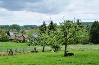 Schafe mit ihren schwarzen Lämmern unter Obstbäumen