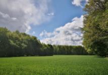 Ackerflächen und Waldabschnitte prägen das Landschaftsbild