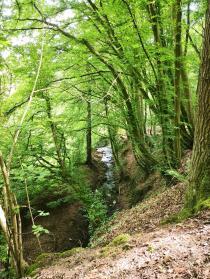 Steilhang am Nackenbach