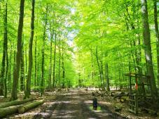 Frisch ergrünter Buchenwald auf der Hochfläche