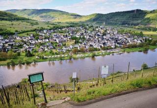 Blick von der Marienburg hinunter nach Pünderich.