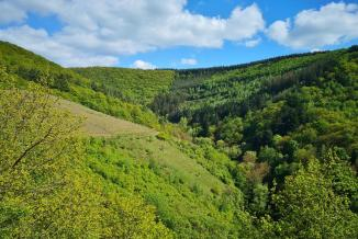Oberhalb der Weinberge erstreckt sich dichter Wald.
