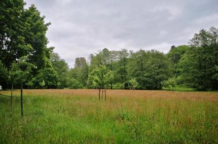 Großzügige Wiesenflächen im Salvaticum gleich neben dem Schulungszentrum