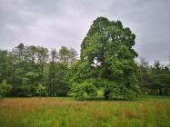 Im Salvaticum gibt es einige prächtige alte Bäume