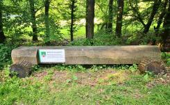 Auf dem Schild steht zu lesen: So viel Holz wächst im Blomberger-Stadtwald innerhalb von einer Stunde nach.
