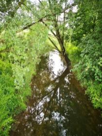 Der Fluss Fuhse fließt am See vorbei und hat diesen ursprünglich befüllt