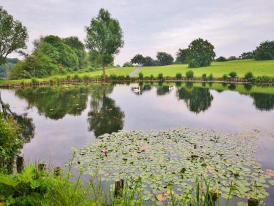 Teich mit Seerosen am Südrand des Sees