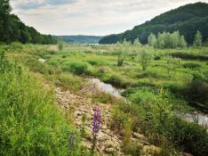 Biotop zwischen Umflut und Seeufer