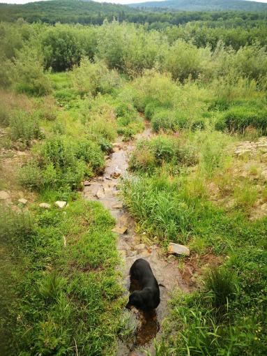 Doxi stärkt sich an einem der kleinen Bäche, die in den See münden