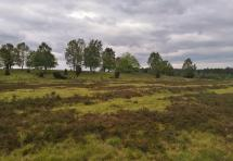 Heidelandschaft am Wümmeberg