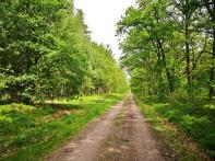 Schnurgerade geht es durch den Wald am Niederhaverbecker Holz