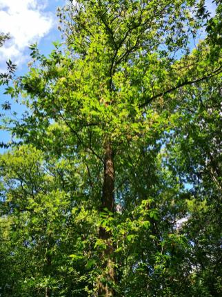 Das sind die Bäume, von denen die Samen stammen