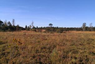 Heideflächen im Ried