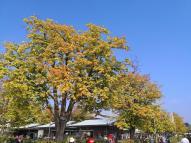 Die ersten bunten Herbstblätter, die mir auf dieser Womo-Tour begegnen