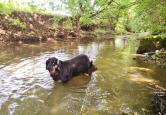 Doxi testet die Wasserqualität der Elta