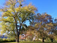 Schöne Bäume im Stadtpark