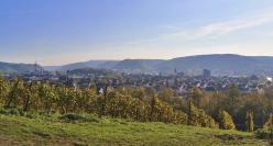 Blick durch die Weinberge zum Rhein