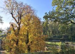 Wald am Schloss
