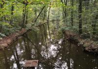 Kleiner See im Wohnungswald, der vom Rotbach gespeist wird
