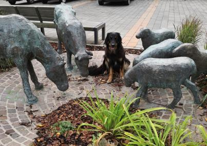 Doxi hat am Kunstmuseum neue Freunde gefunden