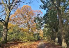 Über mehrere Kilometer geht es entlang des Grenzwegs durch den Wald und die Heide