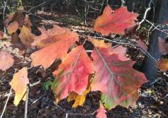 So schön bunt die Blätter