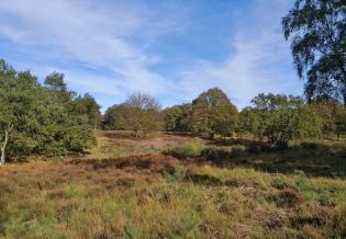 Typisches Landschaftsbild im Nationalpark