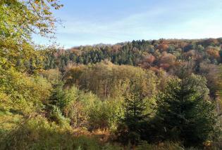 Wald an der Wuppertalsperre