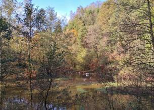 Wasservögel am Zulauf zur Wuppertalsperre
