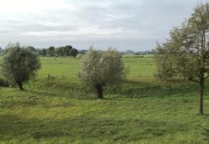 Typische Niederrheinlandschaft mit Kopfweiden