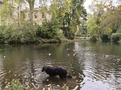 Doxi im Schlossweiher