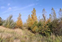 Der Herbst hinterlässt erste Spuren