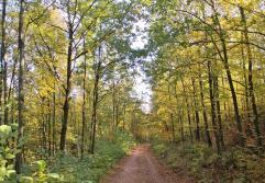 Langsam färbt sich der Herbstwald gelb