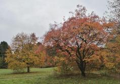 Herbstlich bunte Bäume im Länder-Waldpark Sylvaticum, der jetzt auch zu Yoga Vidya gehört