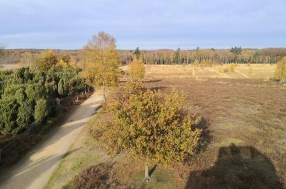 Blick vom Aussichtsturm in das Heidegebiet im Elmpter Schwalmbruch