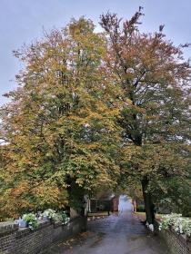Herbstbunte Kastanienbäume an der äußeren Vorburg