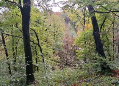 Bunter Herbstwald auf den Ruhrhöhen