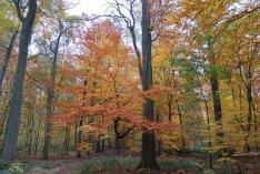 Rottöne dominieren den Wald