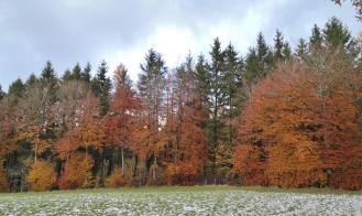 Bei Widdau oberhab des Rurtals liegen noch Schneereste