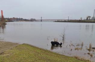 Doxi auf den letzten Metern der Ruhr vor ihrer Mündung in den Rhein