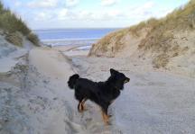Zugang zum Strand durch die Dünen: Ein starker Wind weht uns entgegen.