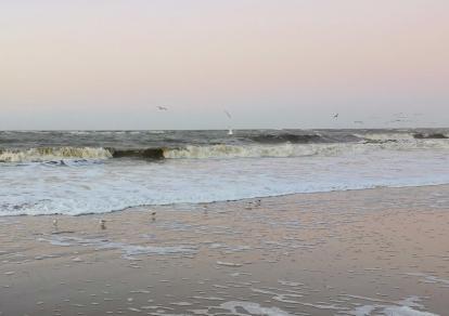 Süß, diese kleinen Strandläufer