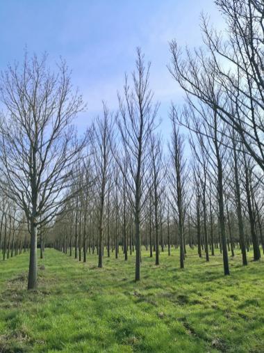 Bis die Laubbäume ergrünen, werden noch einige Wochen vergehen