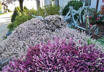 Hübsche Blüte zwischen Büttgen und Kleinenbroich