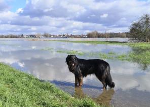 Der Uferweg in Uedesheim ist stellenweise überschwemmt