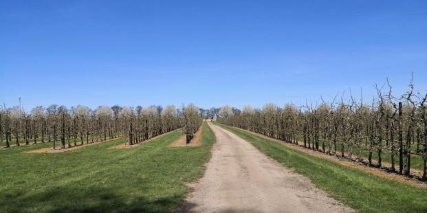 Blick durch die Apfelplantagen von Schloss Dyck zum Dycker Feld und der historischen Kastanienallee