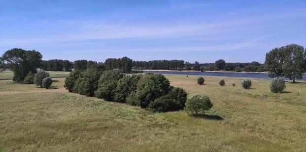 Landschaft am Rheinufer gegenüber von Büderich