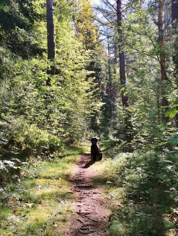 Aufstieg auf schmalen Waldpfaden hinter Kall
