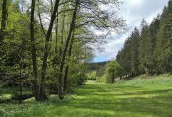Blick in das Kuttenbachtal